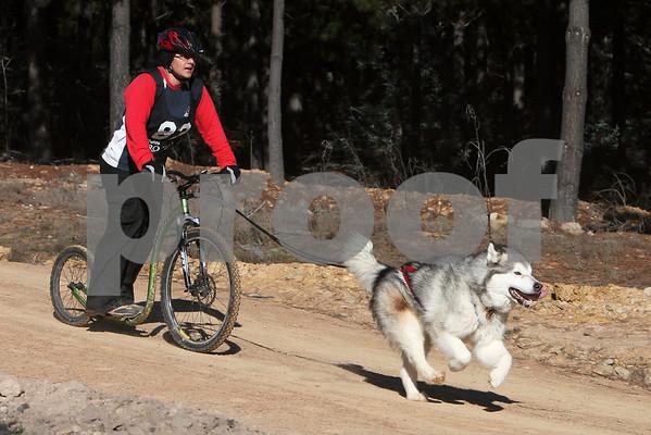 Kowen 2009 - Saturday 1 Dog Race