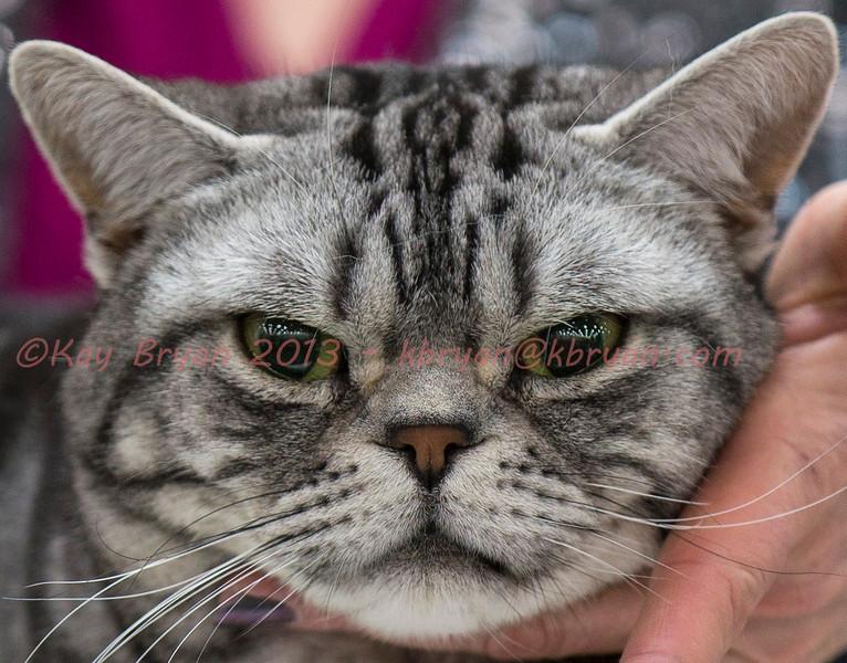 CatShow2014114.jpg