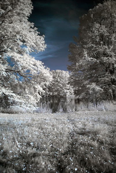 05 Shaw's Nature Reserve Nov 2007 Infrared from RAW 1.jpg
