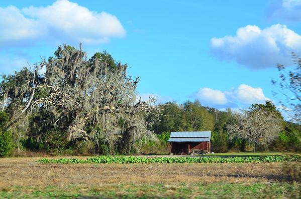Alligator Lake Sunday January 5