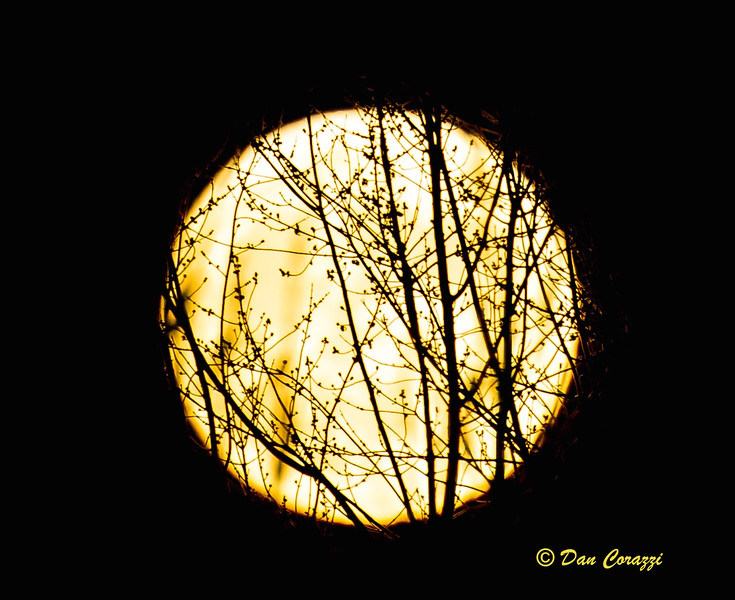 Spuper Moon 11 13 2016.jpg