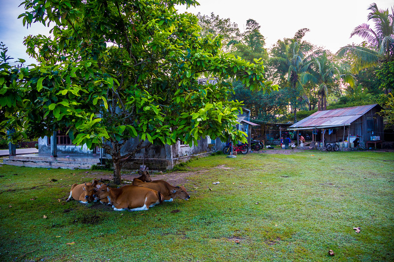 Timor Leste-217.jpg