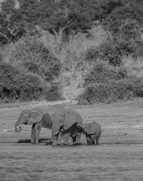 Botswana_June_2017 (5771 of 6179).jpg