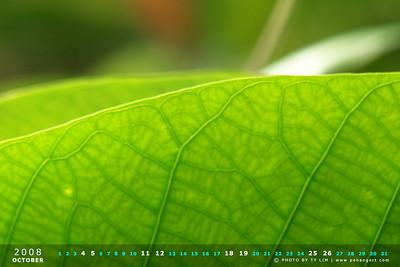 Nature Calendar Wallpaper 2008