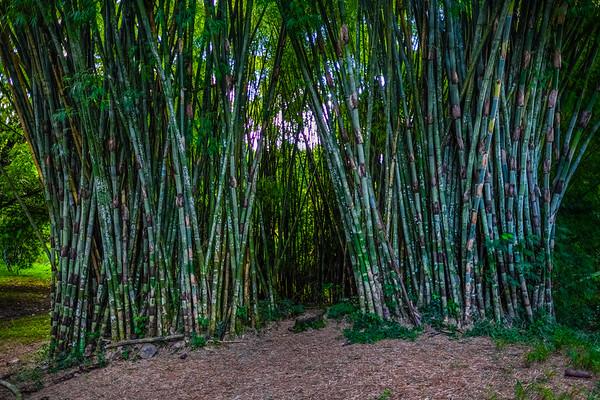 Jardin Botanico de Cienfuegos
