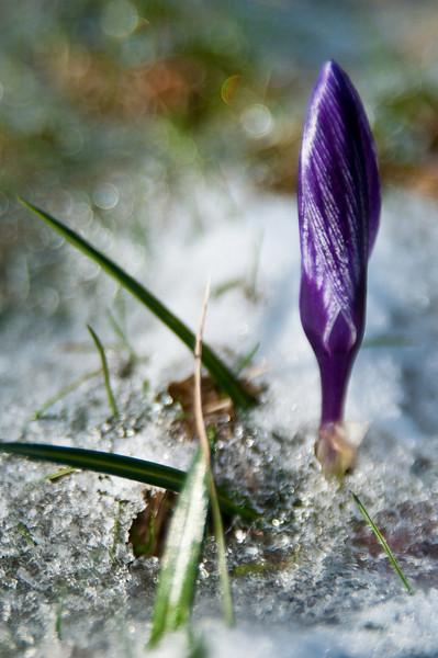 2009 Spring-2