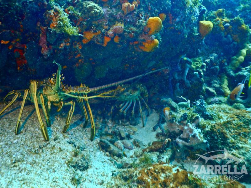 """Spiny Lobsters"" (Proselyte Wreck, St. Maarten)"