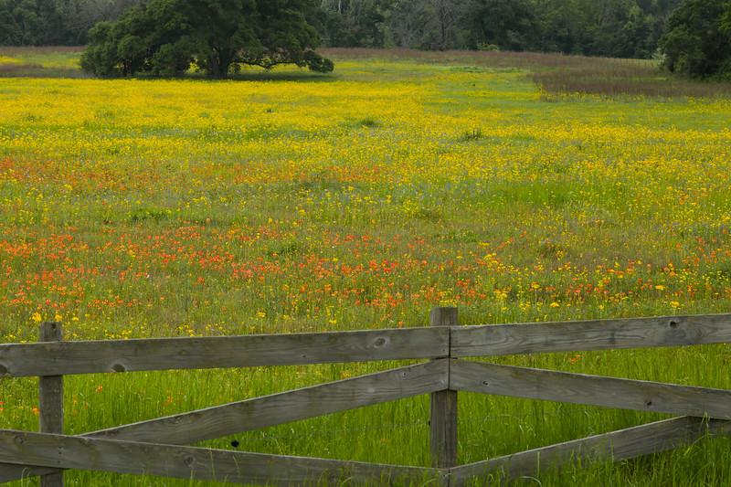 2015_4_3 Texas Wildflowers-7584.jpg