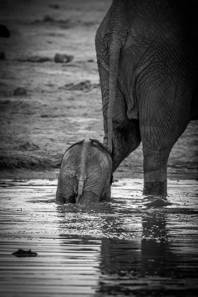 Botswana_June_2017 (4272 of 6179).jpg