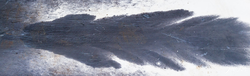 Beautiful marking of a bowhead whale