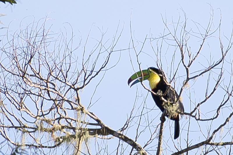 19-Sept Costa Rica Birds-1025.JPG