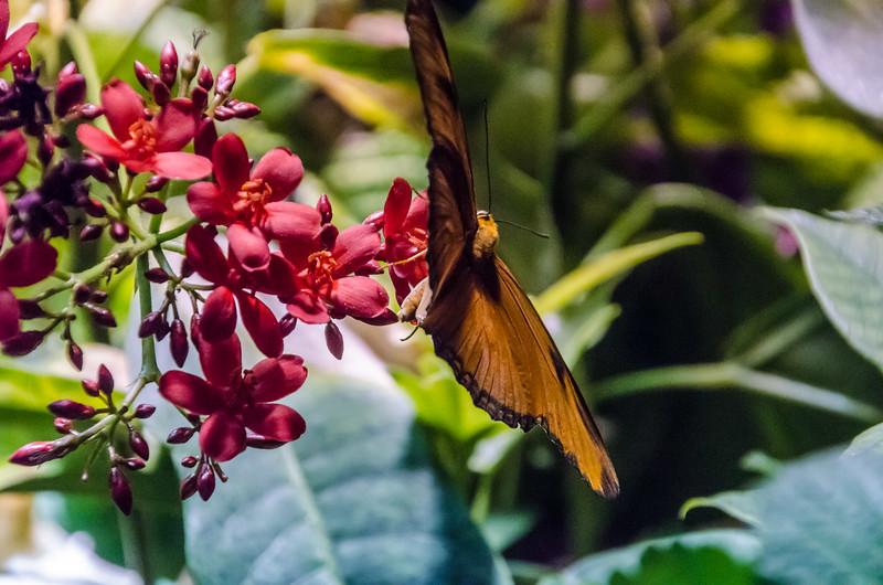 Butterflies at NMNH-19.jpg