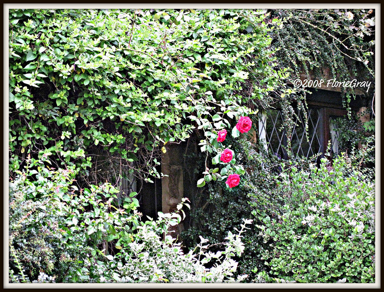 It Must Have Been the Roses 