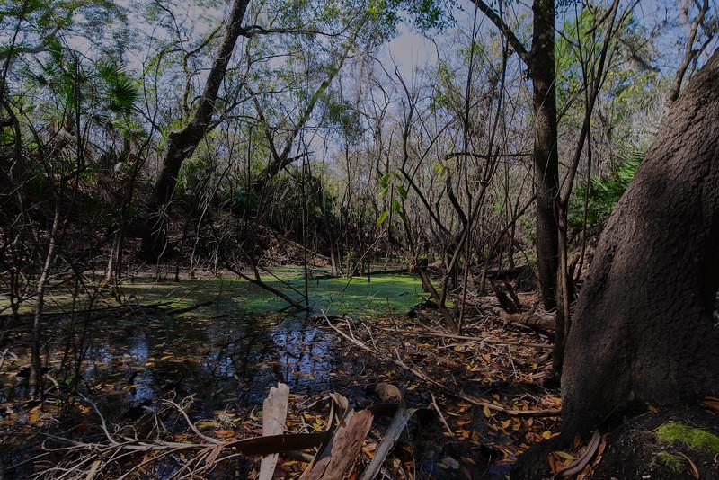 Little Manatee River 8.jpg