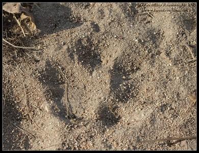 India Feb 2015 - Mammals