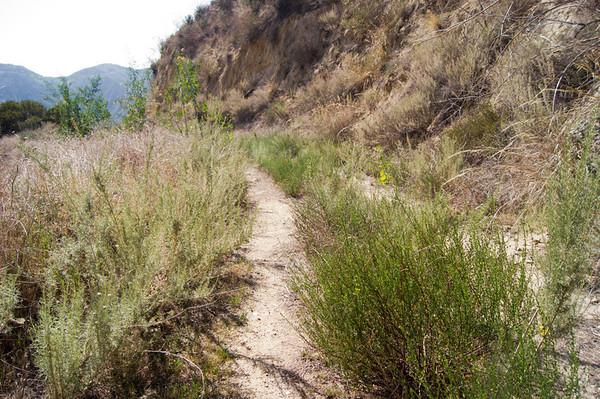 2012-03-12 - Oak Springs, Fascination Springs