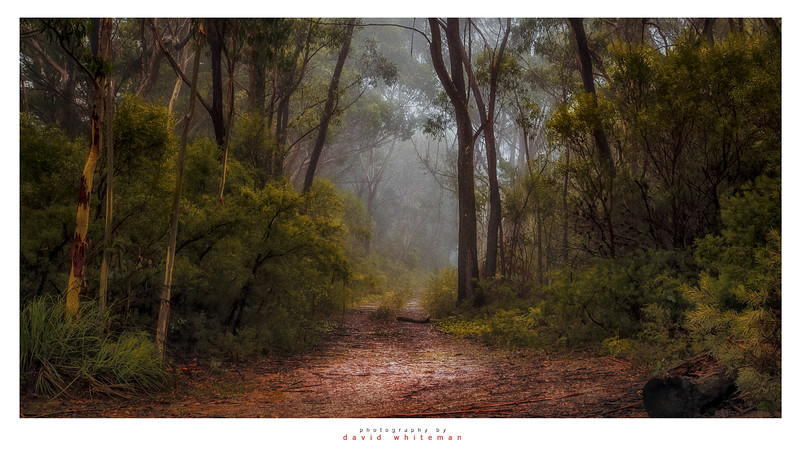 Shipley Bush Track in Mist