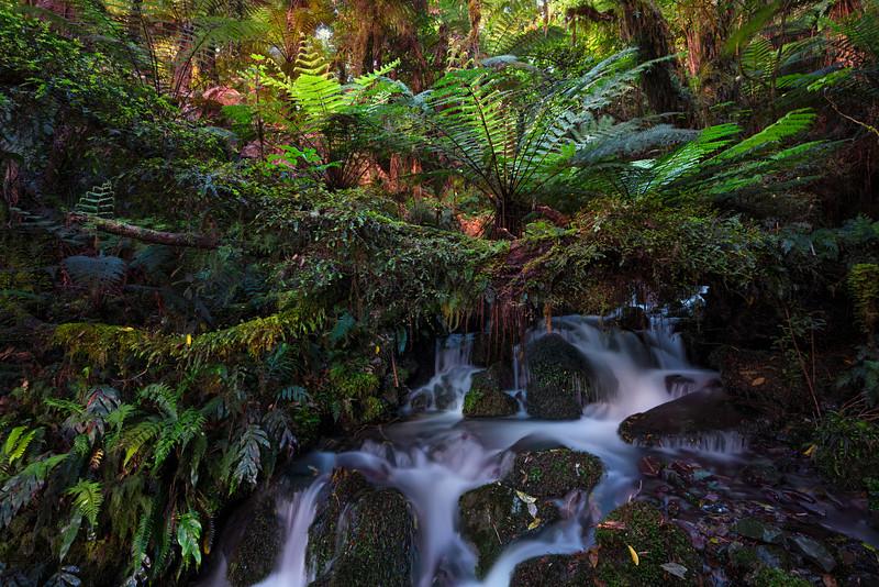 Tree Fern Paradise  |  South Island, New Zealand