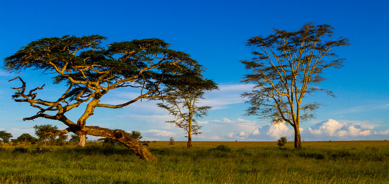 Scenics landscape with trees - East Africa - Tanzania