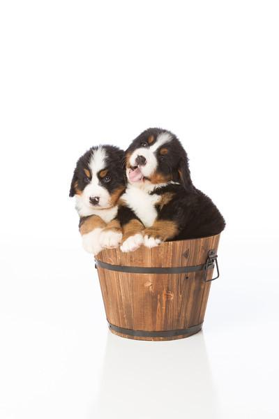 2013-Pearson Pups-Jun02-0418.jpg