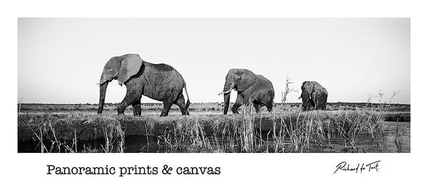 Panoramic Prints & Canvas