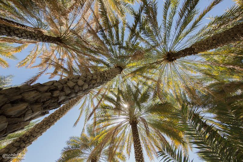 Misfat Al Abryeen - Oman  (11).jpg