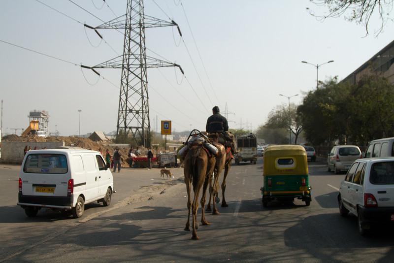 India_2012Feb-5463.jpg