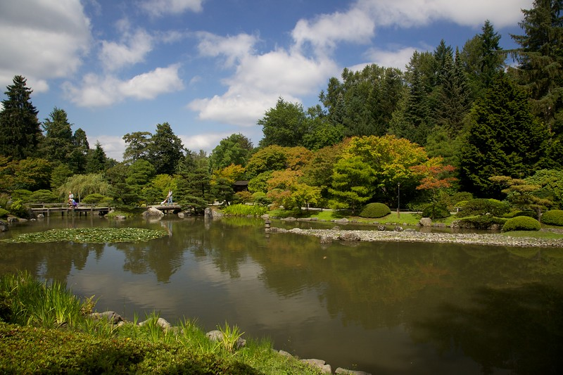 Seattle Japanese Garden koi pond.