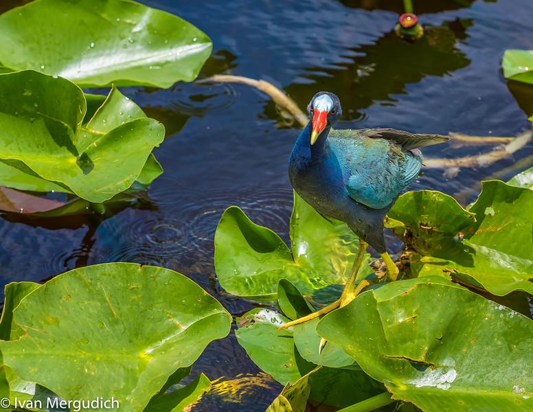 Everglades-13.jpg