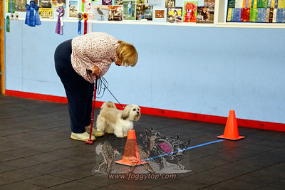 2019 April 13 -  UKC Nosework Trial  Andover NJ