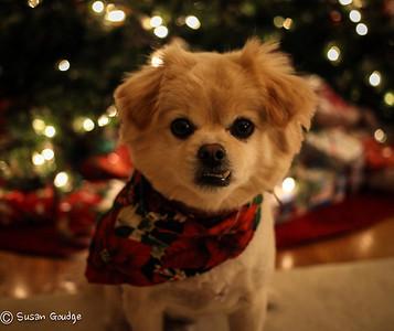 A Very Coachie Christmas 2012