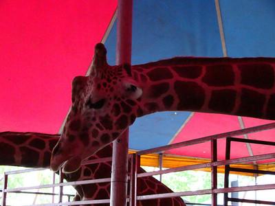 Brookhaven Fair 2009