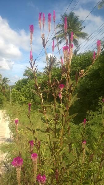 WP_20170706_018 super plant flower.jpg