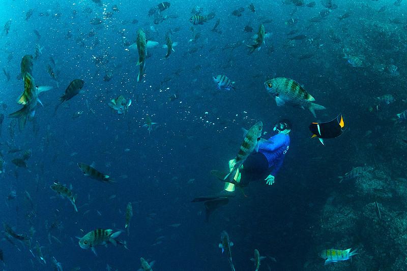 Underwater Galapagos Biodiversity