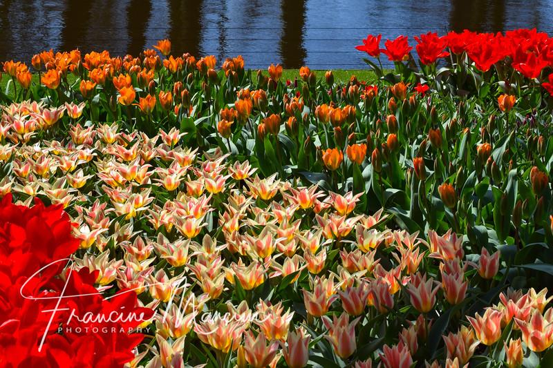 Amsterdam (471 of 845).jpg