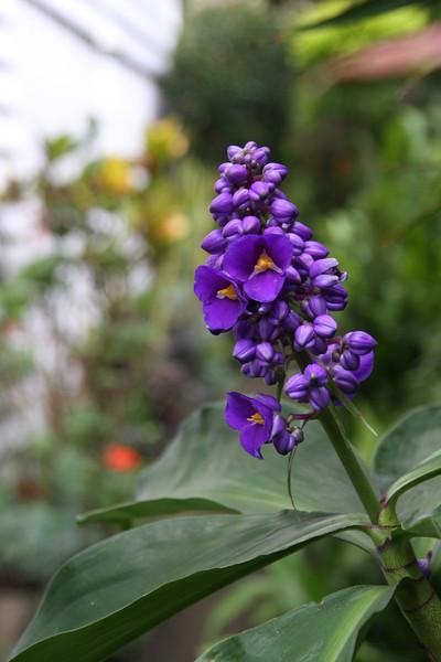 garden (113).jpg