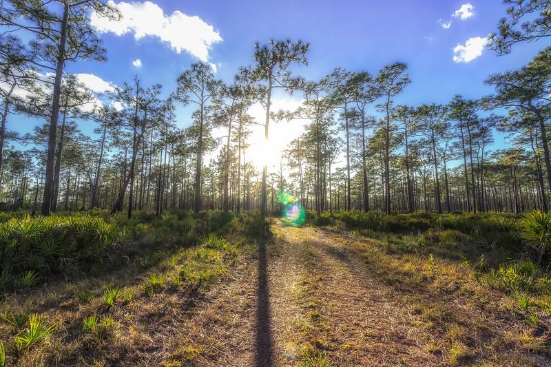 Evening hike at Split Oak Forest