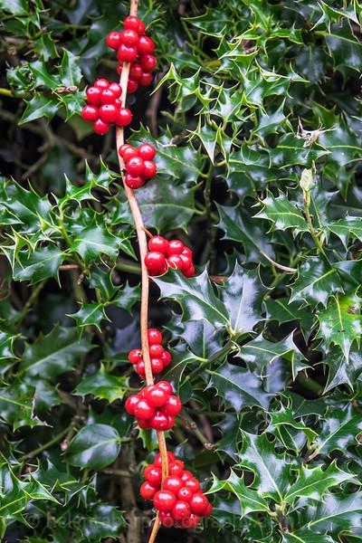 Hob Green autumn-19.jpg