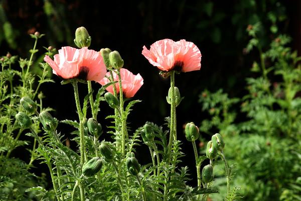 Flowers_060510_0191.JPG
