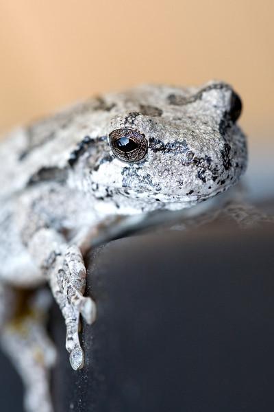 Froggy-2.jpg