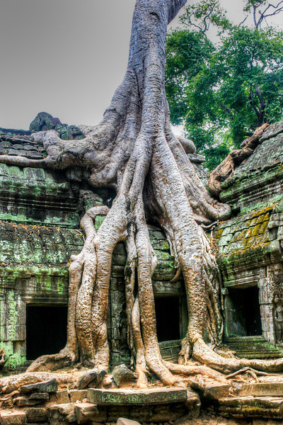 wymanstocks-Cambodia-Siem Reap-tree-growing-on-ruins.jpg