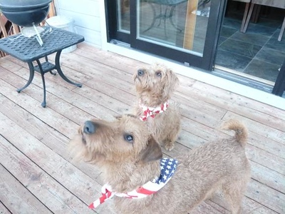 Star Spangled Dogs