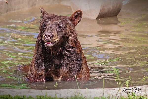 Bears Archive