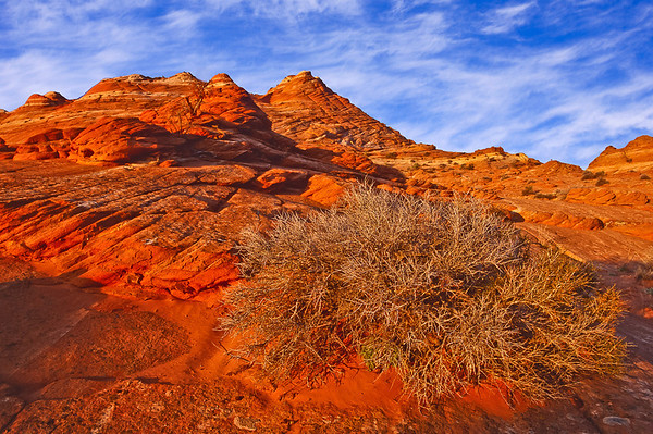 Waves of Stone:  The Coyote Buttes and White Pocket