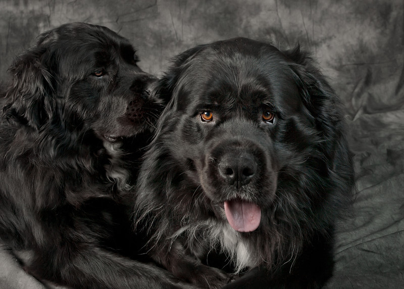 Moose & Meika