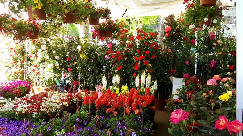 Saturday Flower Market