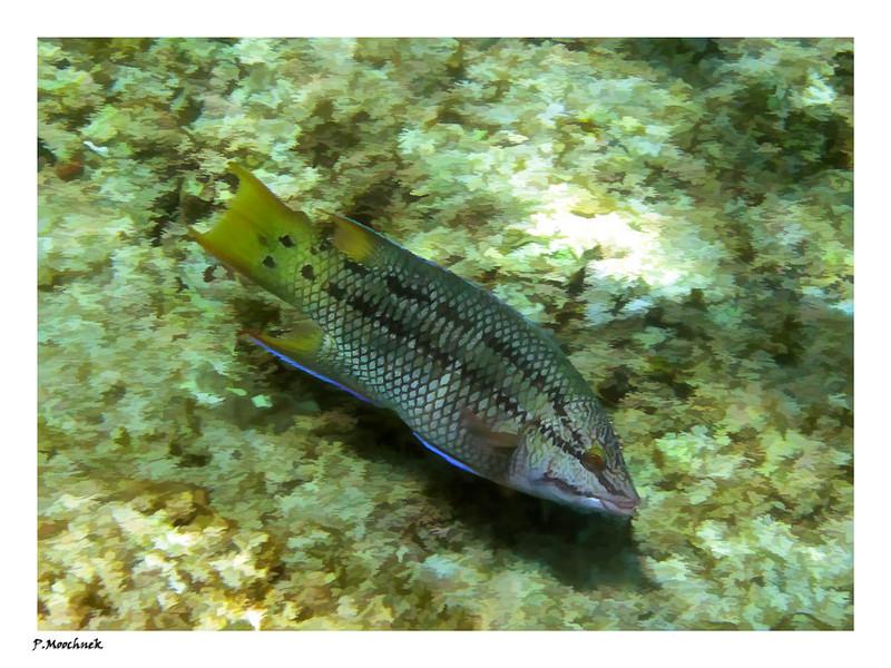 An Artistic Fish