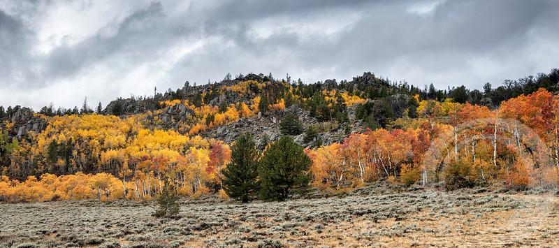 South Pass Trees