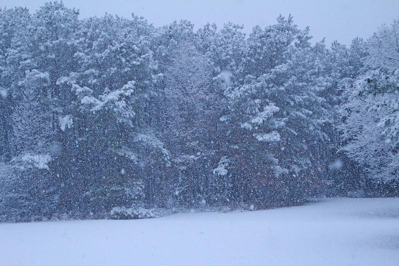 Snow 415