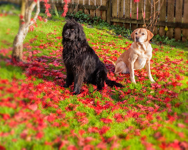 Fall Dogs
